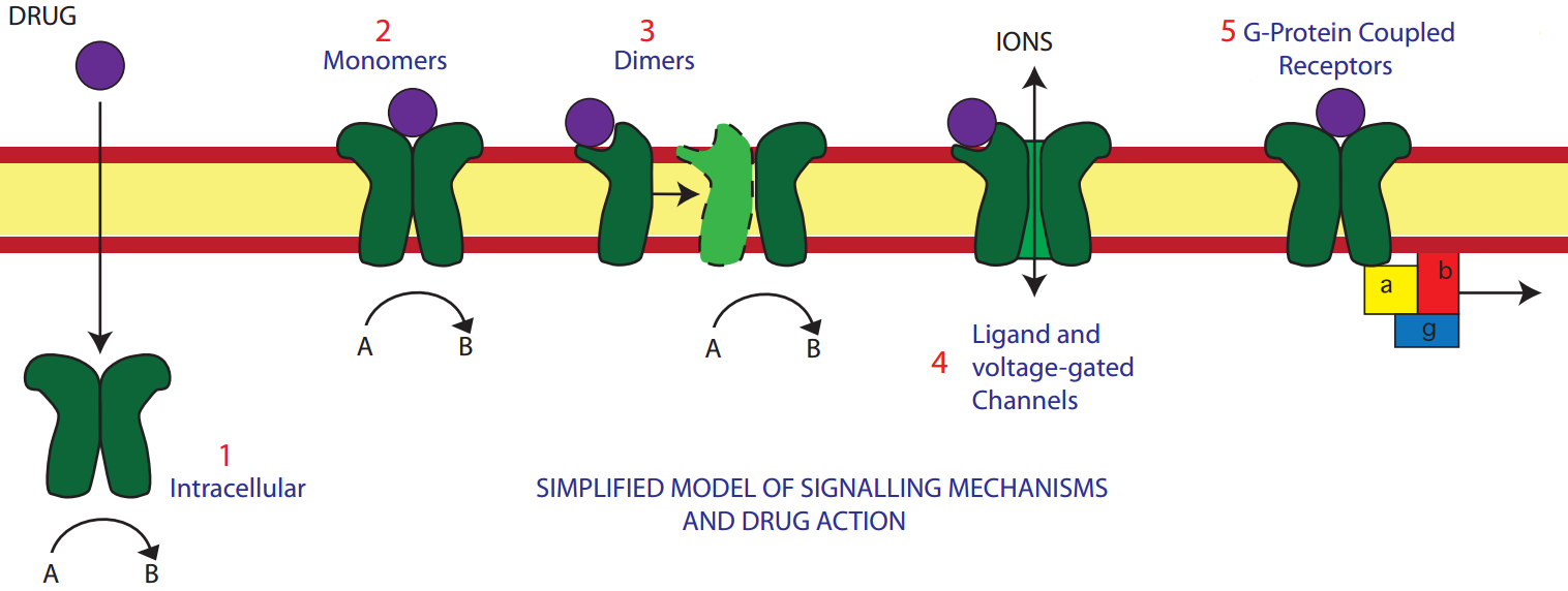 Receptor types and methods of signaling. Used without permission from icuprimaryprep.com